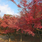 どどりのパワースポット巡り 香川:銭形砂絵(琴禅公園)